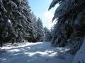 Winterspaziergang in der Schneifel