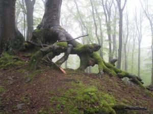 Baum am Nerother Kopf