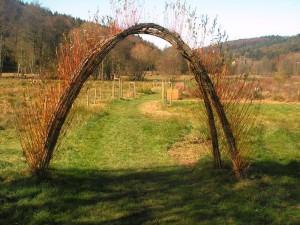 Weidenbogen in Himmerod
