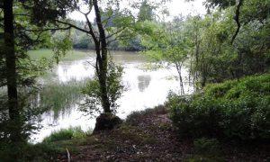 Blick aus dem Wald auf den ehemaligen Löschteich